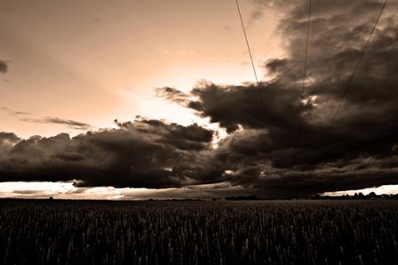 wheat-field-3