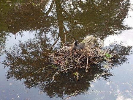 vogelnest-in-een-boom